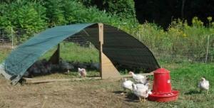 Silvermine Farm Free Range Turkeys, Sutton, MA