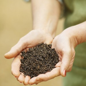 Woman holding soil compost