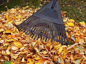 eco-friendly fall cleanup